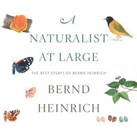 A Naturalist at Large: The Best Essays of Bernd Heinrich - Bernd Heinrich