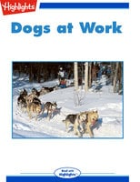 Dogs at Work - Sherry Shahan